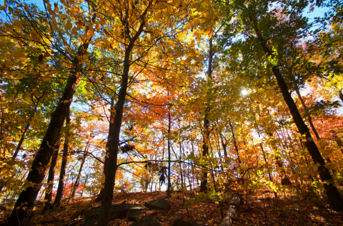 There's plenty to do along the way, like hike in the surrounding Palisades Interstate Park.