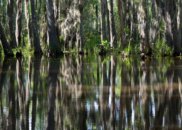 1. Honey Island Swamp, Slidell