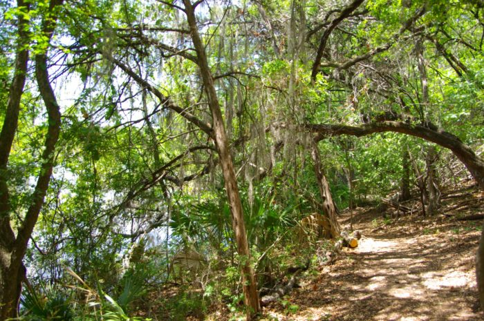 The Mayfield Park Preserve has picturesque hiking trails.