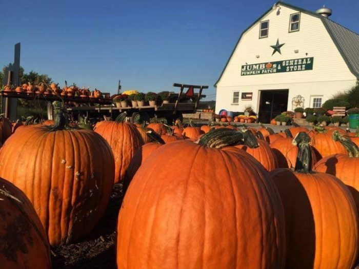 12. Jumbo's Pumpkin Patch - 6521 Holter Rd, Middletown MD