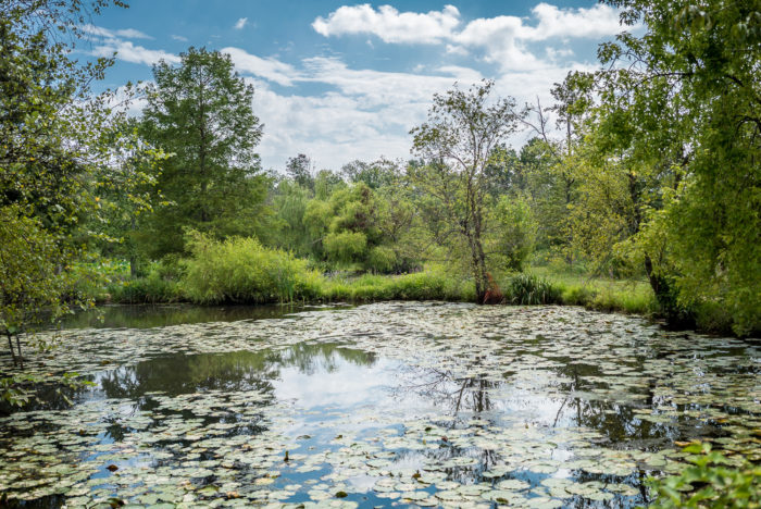 5. Kenilworth Park & Aquatic Gardens