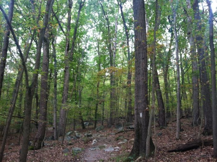 After making the drive to Pylesville, about two hours north of the city, you will head towards Rocks State Park.