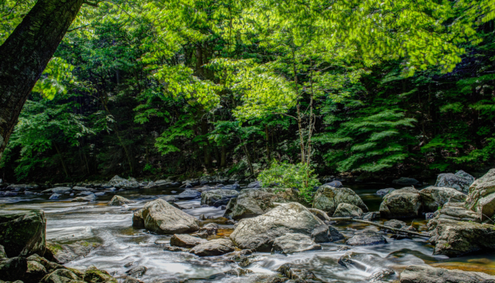 The Ken Lockwood Gorge Wildlife Management Area runs along the south branch of the Raritan River.