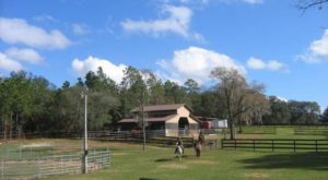 7 Charming Farms Where You Can Spend The Night In Florida