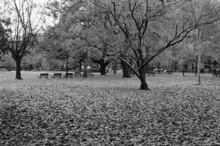 3. Lafayette Square Park