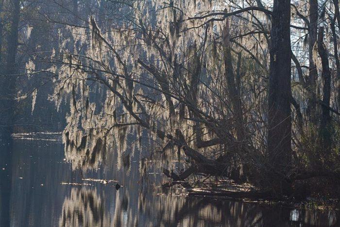 1) Manchac Swamp, Pontchatoula