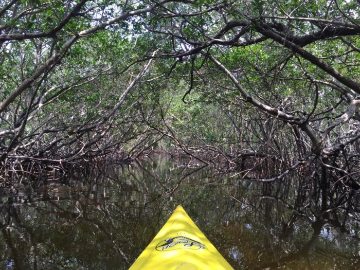 The preserve can also be explored by water, with kayak trails through the mangroves. Kayak rentals are available through local companies. The park is free and dog-friendly (with a leash, of course).