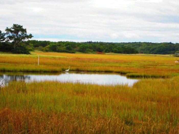marsh-in-autumn