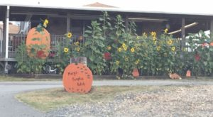 These 12 Charming Pumpkin Patches In Arkansas Are Picture Perfect For A Fall Day