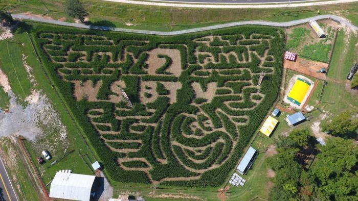 2. Buford Corn Maze—4470 Bennett Road, Buford, GA 30519