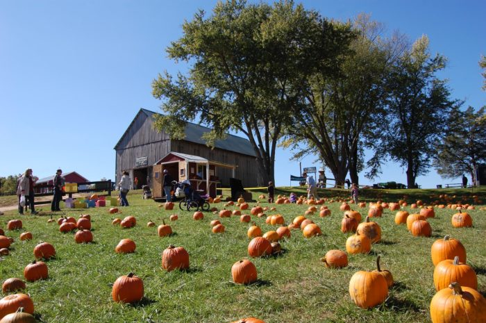 Summers farm at frederick, maryland || family pumpkin patch 2015.