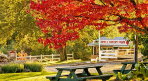 These Charming Apple Orchards In Northern California Are Picture Perfect For A Fall Day