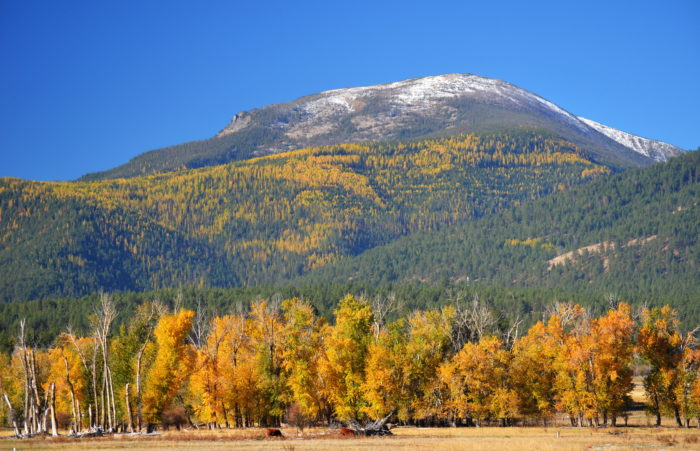 2. Enjoy the fall foliage on a scenic drive down some country roads.