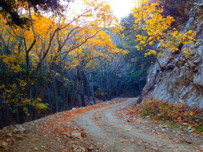 4. Live Oak Canyon Road, Trabuco Canyon