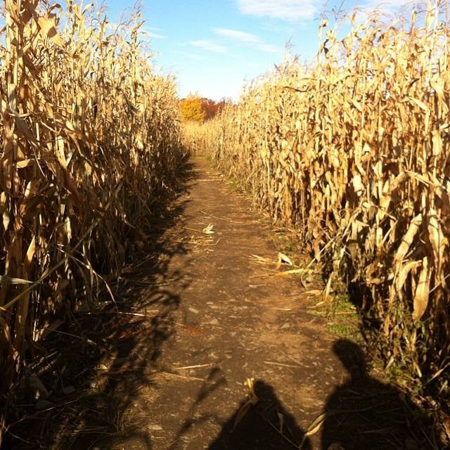 This definitely isn't a quick excursion – plan to be in the maze for at least a couple hours. You can easily spend upwards of three hours amongst the corn, searching for special items marked on the map you are provided.