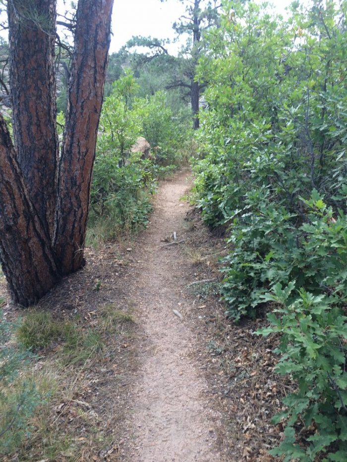 While walking one of the various .5 to 4 mile trails, you will pass through such beautiful ecosystems as shrublands, grasslands, and caprock...