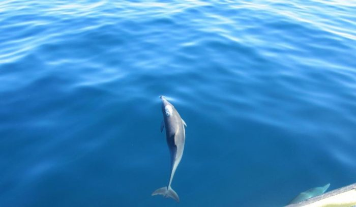 Watch for playful dolphins to accompany your boat on the journey - they're a common sighting.