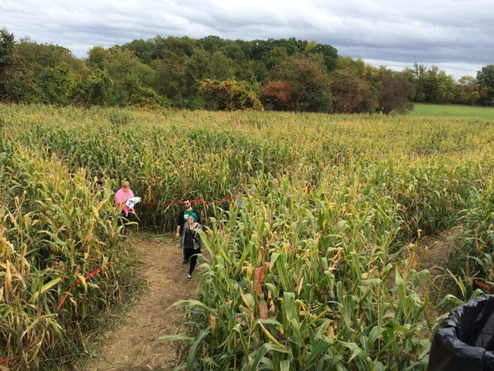 During your adventure, you'll encounter plenty of exciting twists and turns, not to mention a few dead ends and even a few bridges up and over the cornstalks.