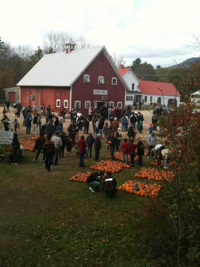 When the train comes to a stop it's because you've arrived at White Mountain Cider Co., where you can pick a pumpkin from the patch.