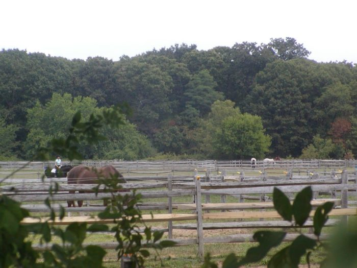 Still looking for more reasons to visit Caumsett? What about all of the incredible bird-watching opportunities that await for you here, as well an entire  barn filled with beautiful horses!