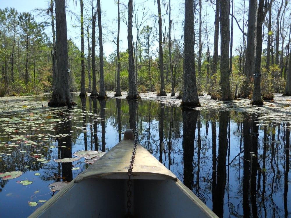 5 Beautiful Cypress Swamps In South Carolina