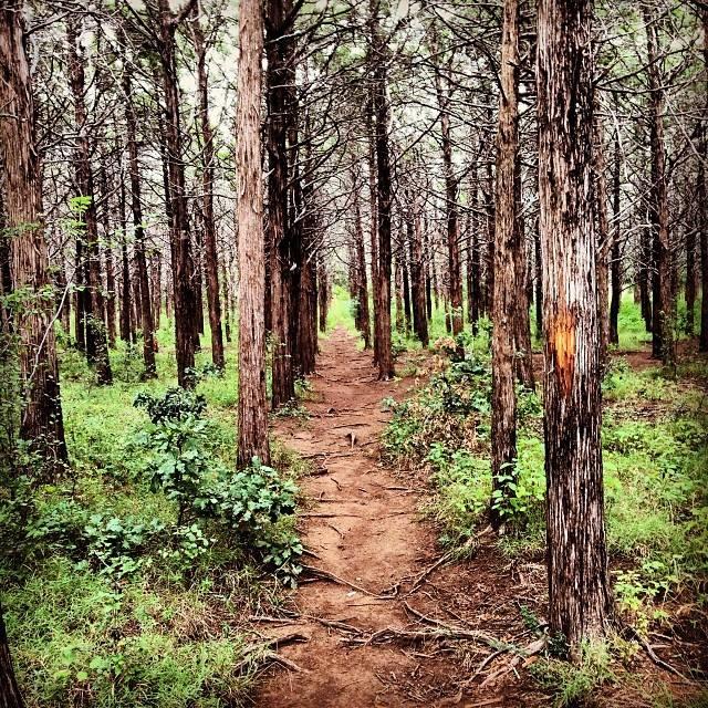 Parallel Forest, Wichita Mountains