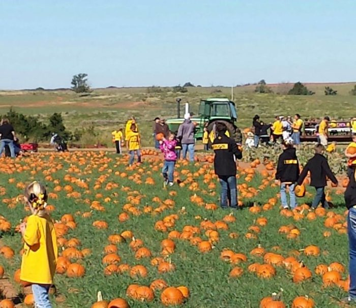 It's a pumpkin patch where you can pick your pumpkin right off the vine.