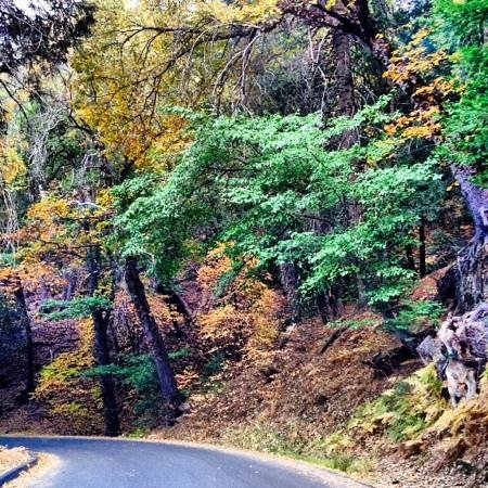 9. Palomar Divide Road, Palomar State Park