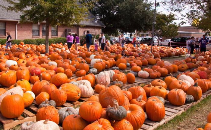 3) St. Augustine Pumpkin Palooza, 3412 Haring Rd, Metairie