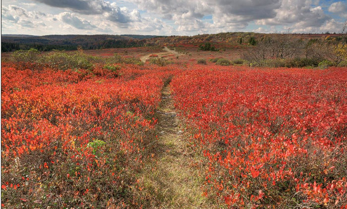 You can walk the trails through this red carpet as far as the eye can see.
