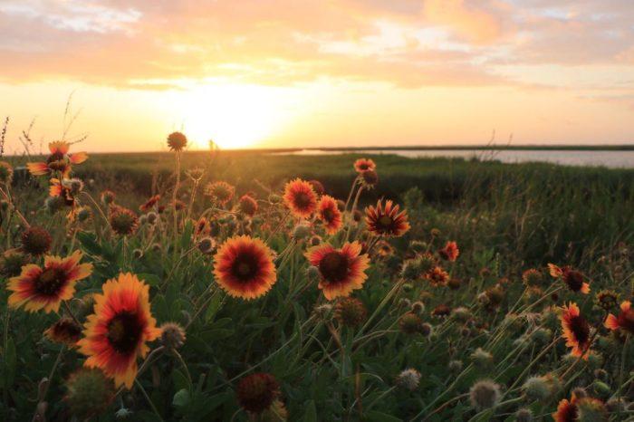 5) Sabine Wetland Walkway, Sabine National Wildlife Refuge