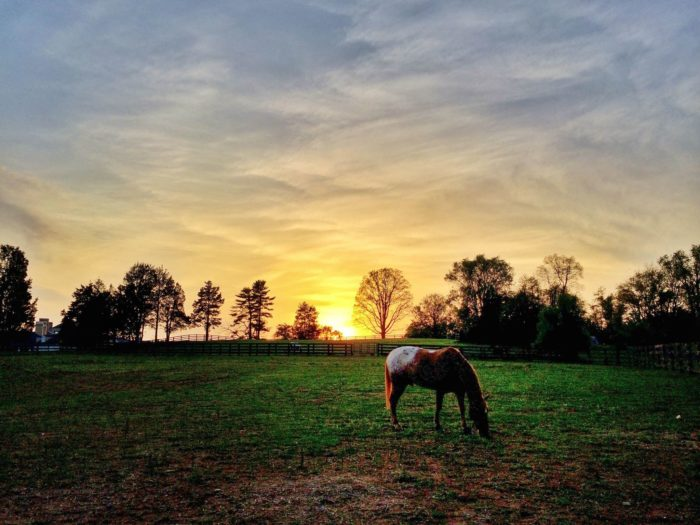 Salamander is located in horse country in Middleburg so they offer a wide range of equestrian activities including trail rides and riding lessons.
