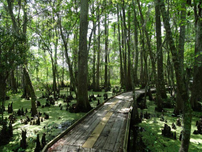 10. Jean Lafitte National Historical Park And Preserve