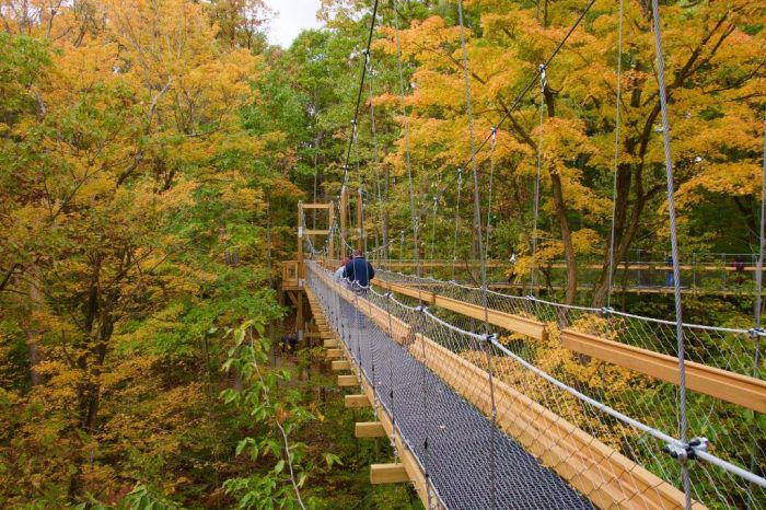 It's also the PERFECT way to take in the breathtaking fall foliage during the autumn months.