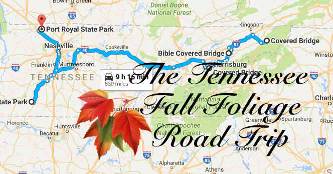 Take This Road Trip To View The Best Fall Foliage In Tennessee