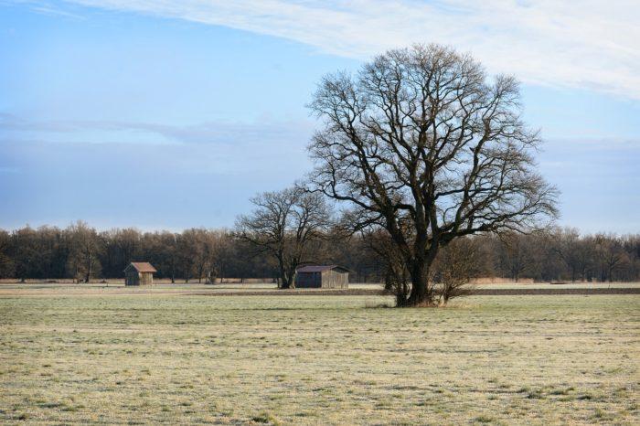 tree-1203605_1280