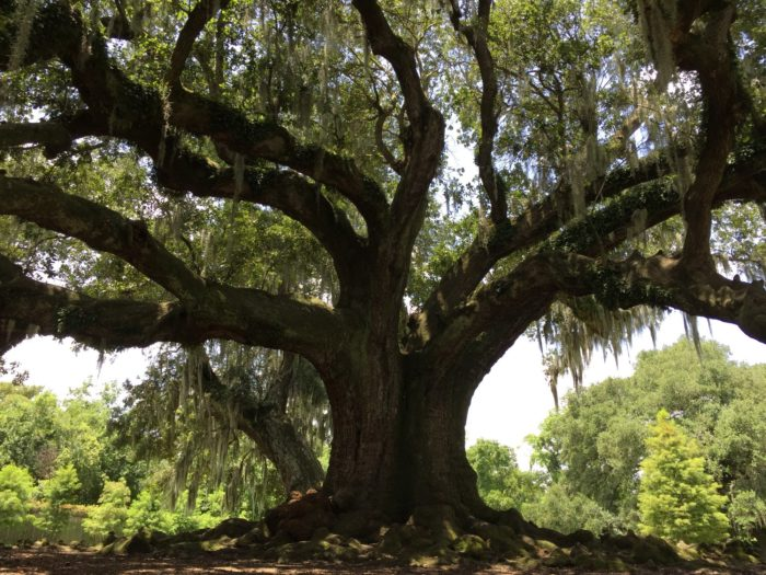 7. The Tree of Life in Audubon Park