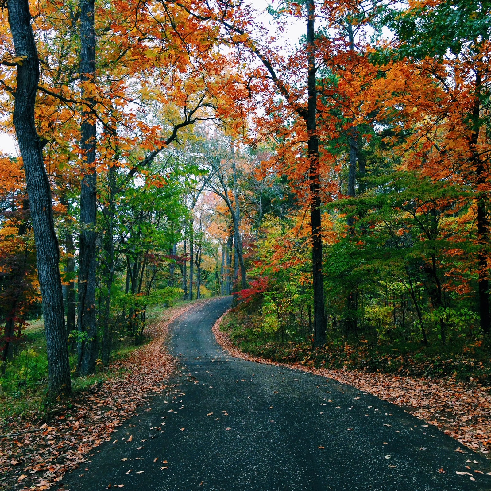 8 Country Roads In Texas With Beautiful Fall Foliage