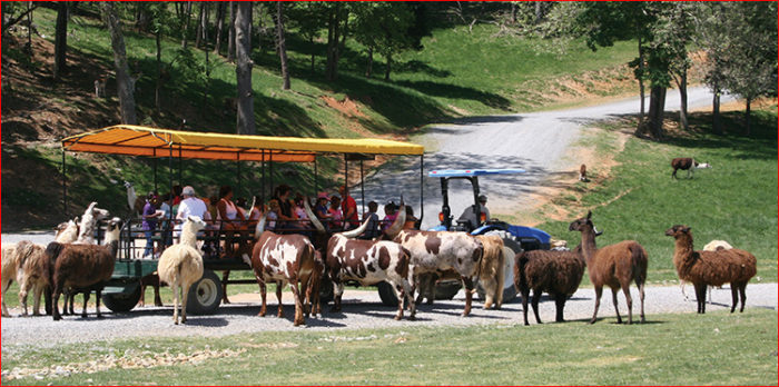 wagon-ride-image