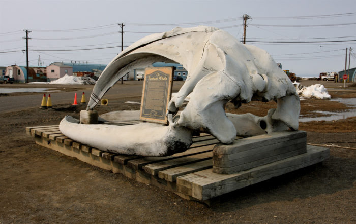 In town, don't be surprised if you find giant whale head skulls displayed as a symbol of tradition, culture and survival. It might be graphic to outsiders, but in Barrow it is simply a way of life.