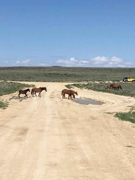 wild-horses-on-the-trail