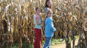Get Lost In These 8 Awesome Corn Mazes In West Virginia This Fall