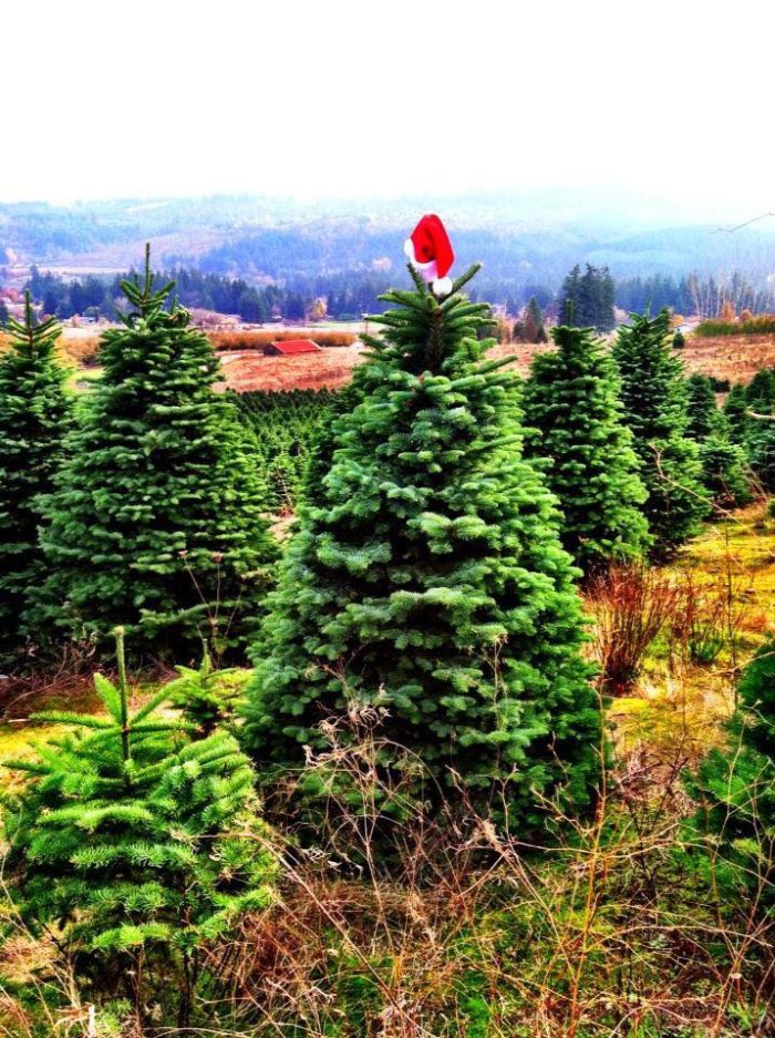 The Christmas Store And Tree Farm In Oregon That's Simply ...
