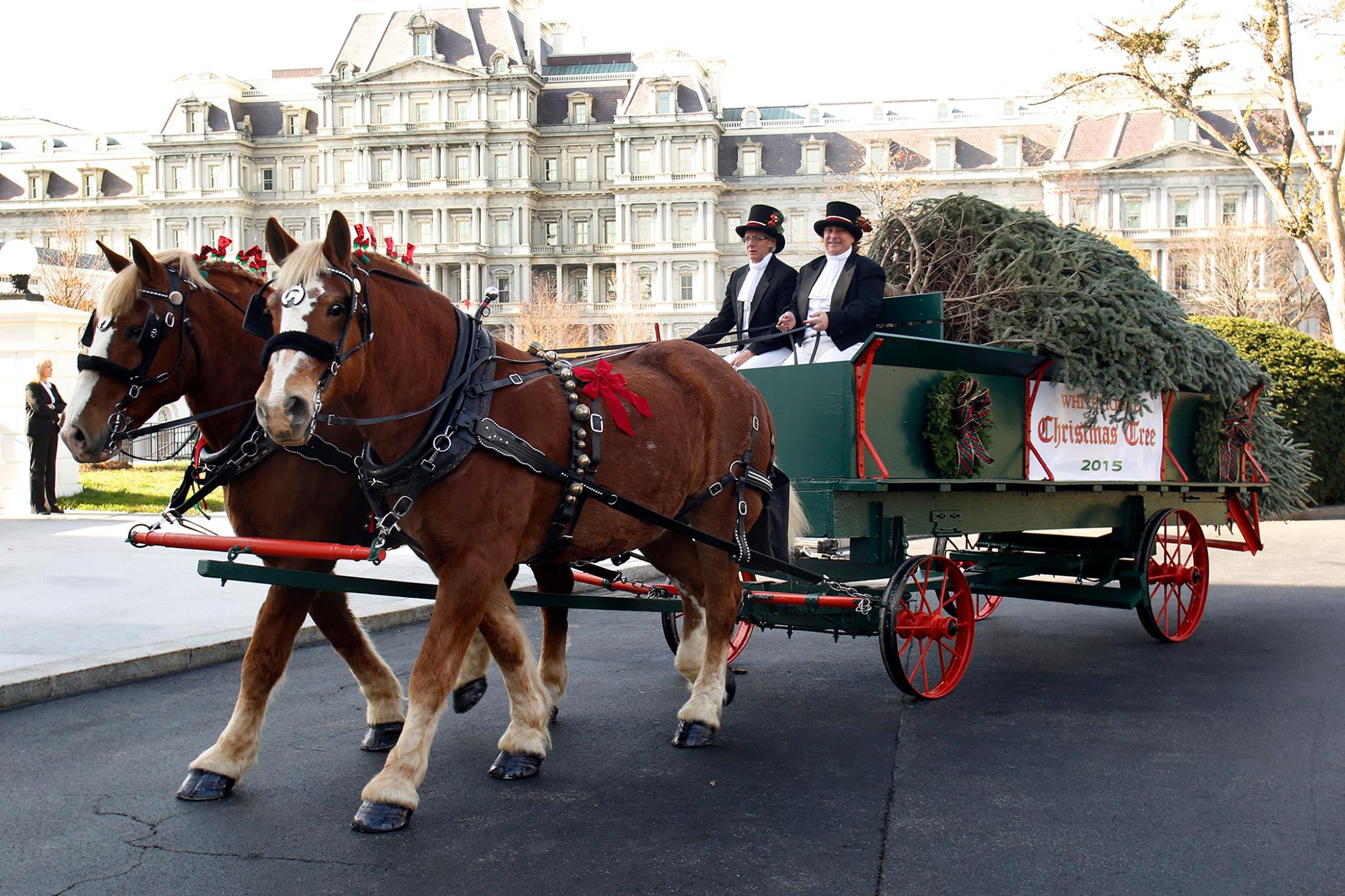 7 Magical Horse Drawn Carriage Rides In Virginia