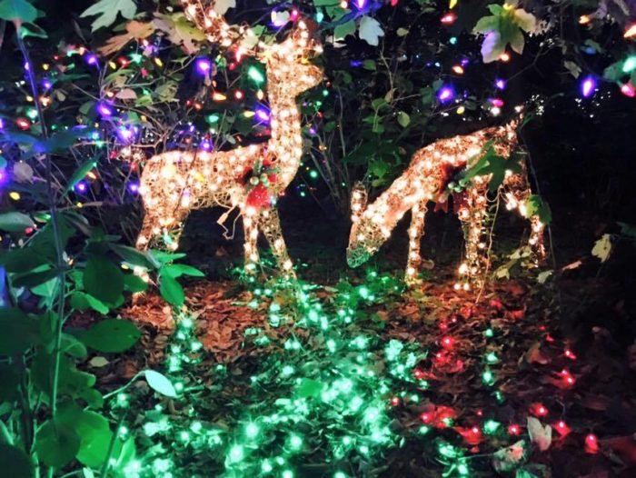 The Best Christmas Lights Road Trip In North Carolina In 2016