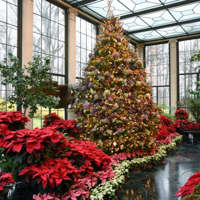 Garden Decor Newcastle: 8 Best Christmas Light Displays In Delaware 2016