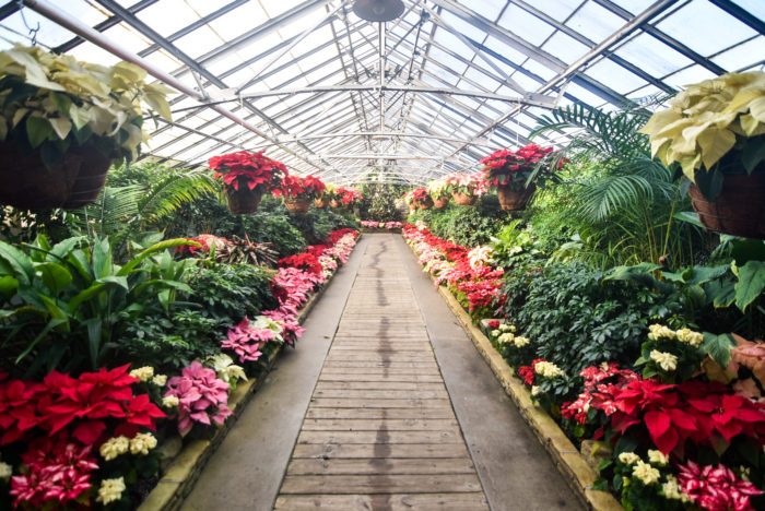 Hidden Gems Rockefeller Park Greenhouse