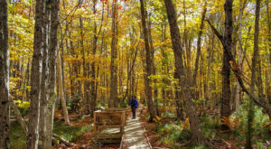 Some People Call This Forest Path In Maine A Little Slice Of Paradise
