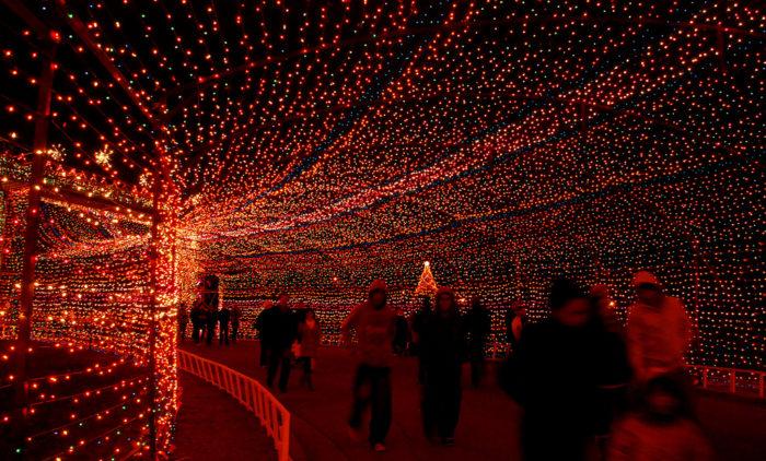 Do A Christmas Light Show