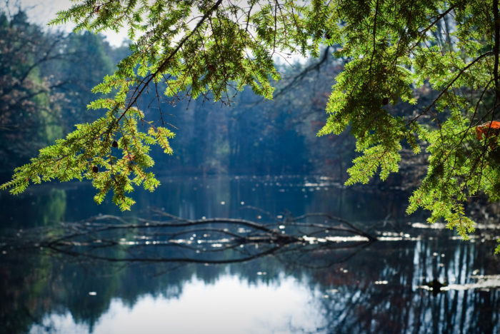 Natural wonders Oak Openings